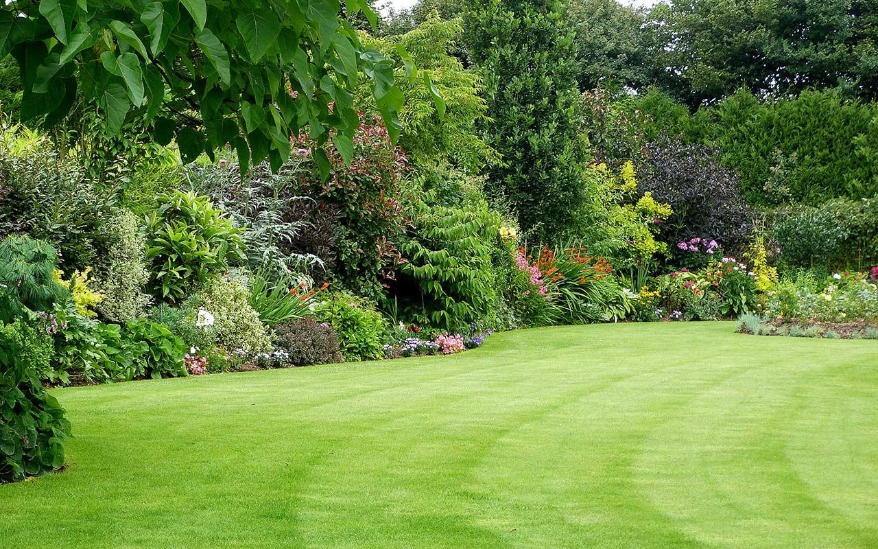 garden_lawn_1