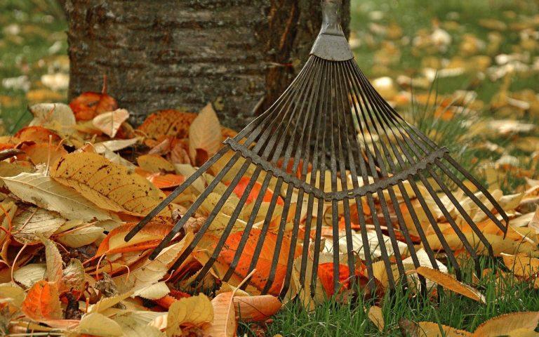 autumn rake